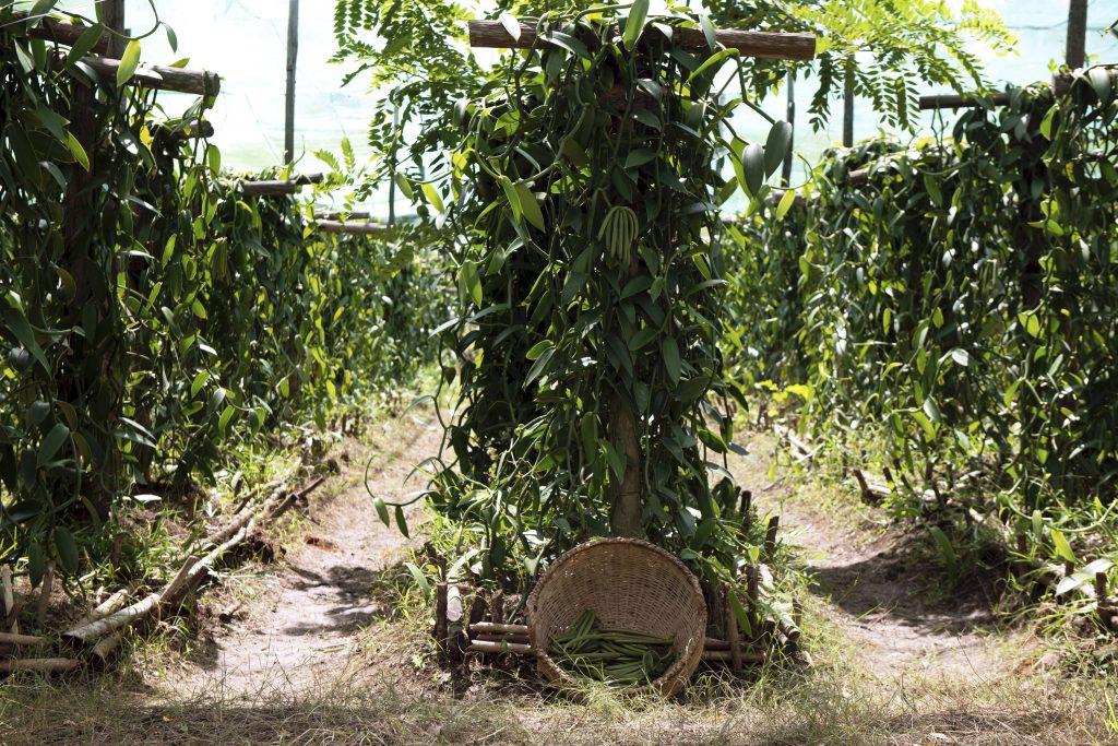 Chanel Behind the Jar Vanilla Planifolia