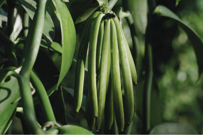 Chanel Behind the Jar Vanilla Planifolia feature image
